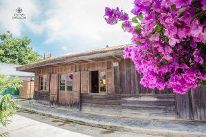 cây hoa giấy bên căn nhà gỗ