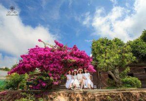 cây hoa giấy ở Đà Lạt