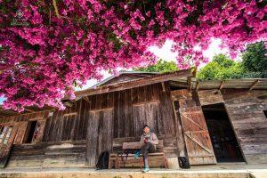 Cây hoa giấy tại Đà Lạt