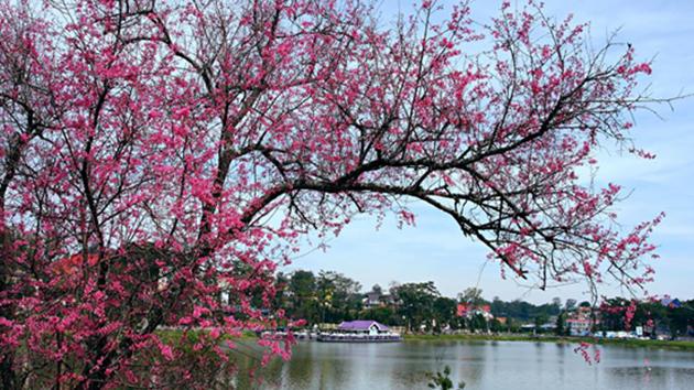đặt phòng khách sạn gần hồ xuân hương Đà Lạt