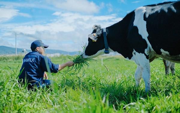 Tham quan trang trại bò sữa Đà Lạt