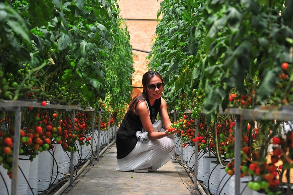Tour du lịch nhà vườn tại Đà Lạt