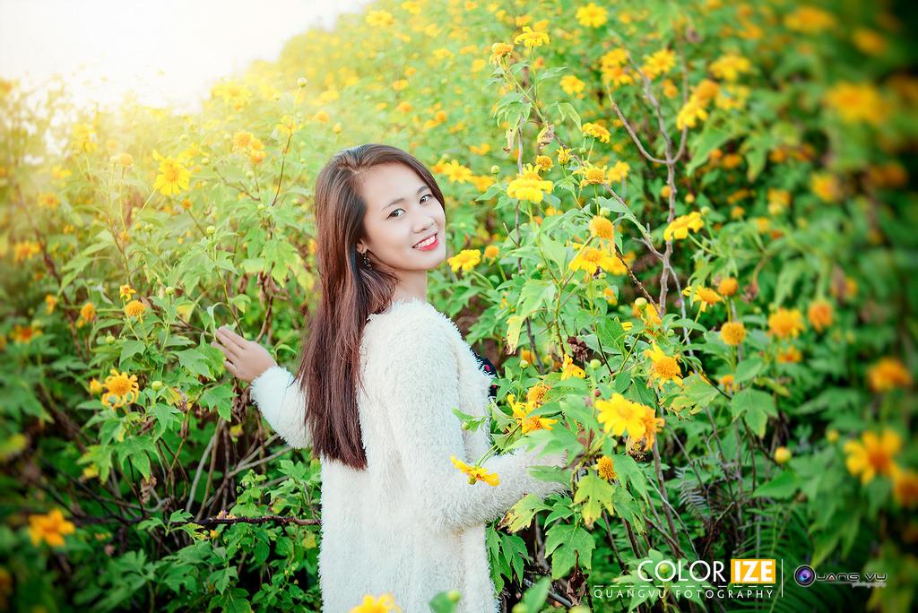 Check in hoa quỳ Đà Lạt