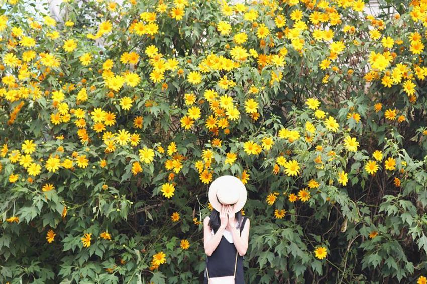 chụp hình hoa dã quỳ Đà Lạt