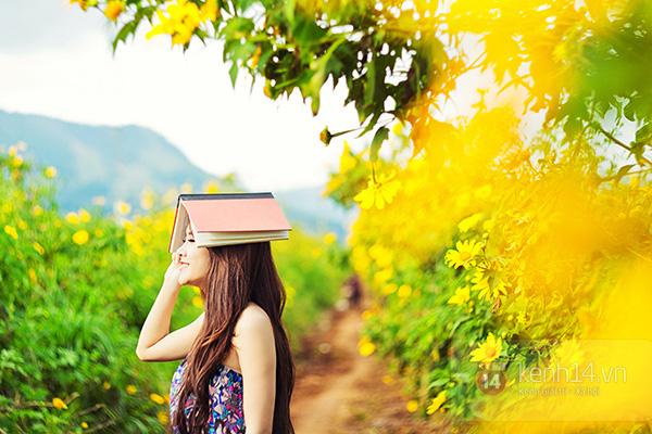 Cung đường ngắm hoa dã quỳ Đà Lạt