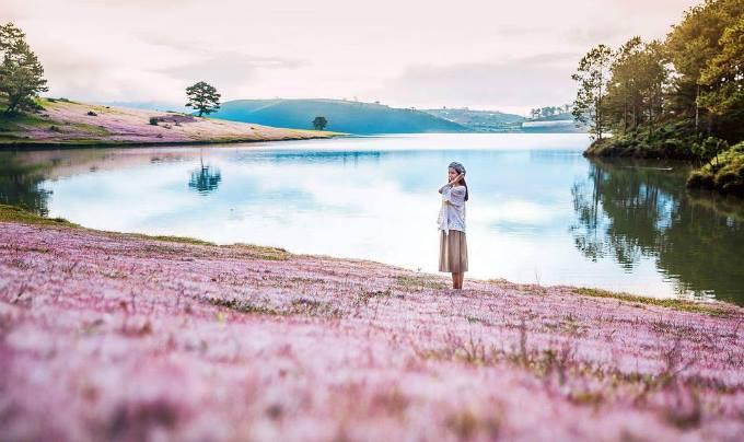 Kết quả hình ảnh cho Cánh đồng cỏ hồng ở Thung lũng Vàng