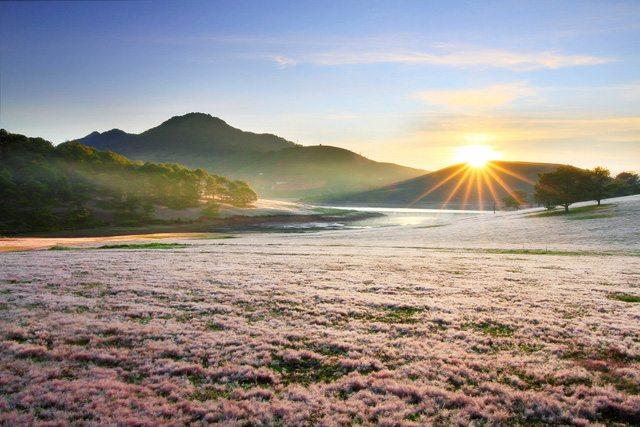 Đồi cỏ hồng suối vàng
