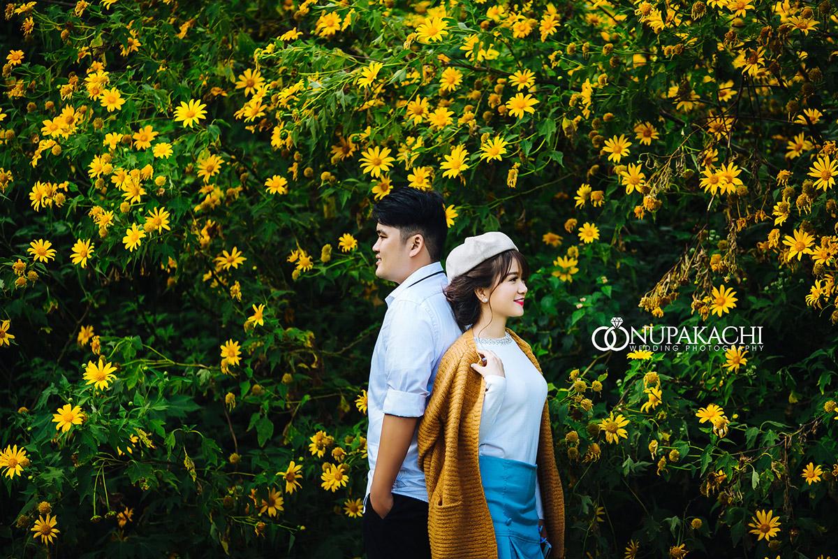 Hình ảnh hoa dã quỳ ở Đà Lạt