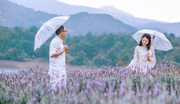 Cánh đồng hoa Lavender Đà Lạt