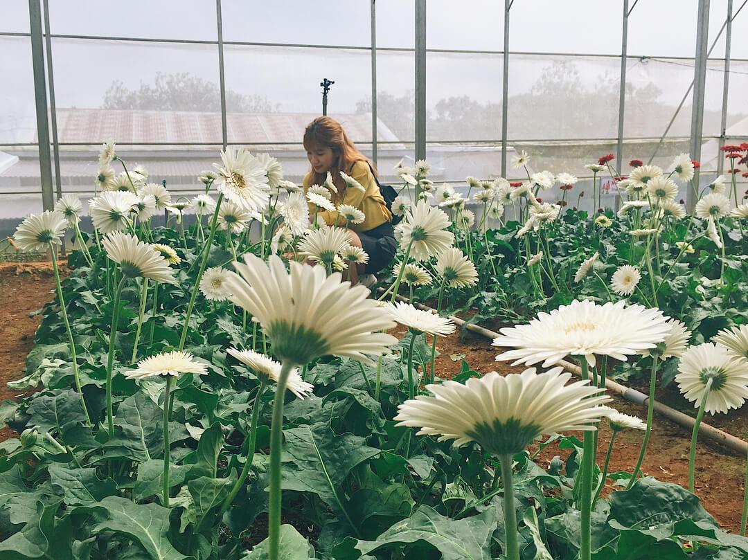 Đi làng hoa Vạn Thành mùa nào đẹp