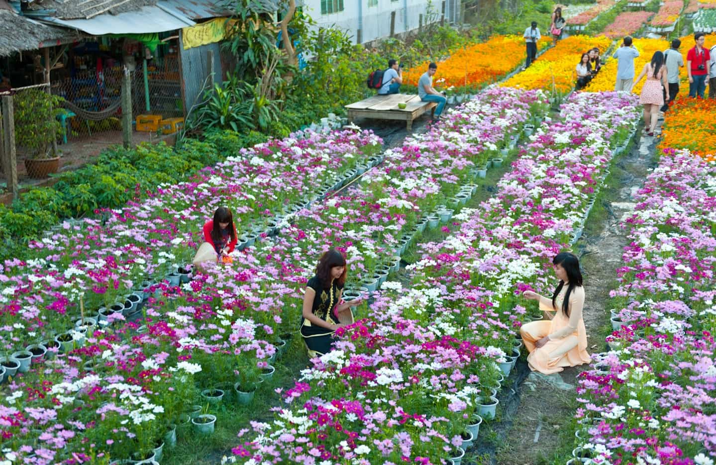 Đường đi Làng hoa vạn Thành Đà Lạt