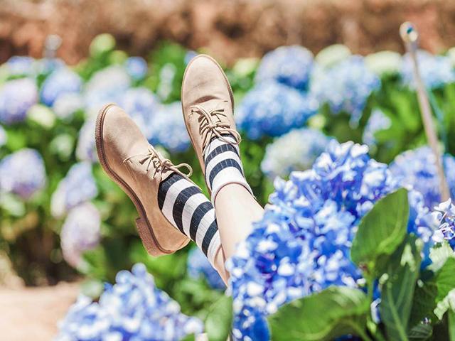 Đường đi Vườn Hoa Cẩm Tú Cầu Đà Lạt