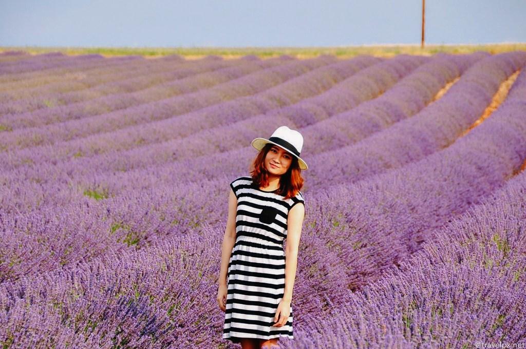 Đường đi cánh đồng hoa Lavender Đà Lạt