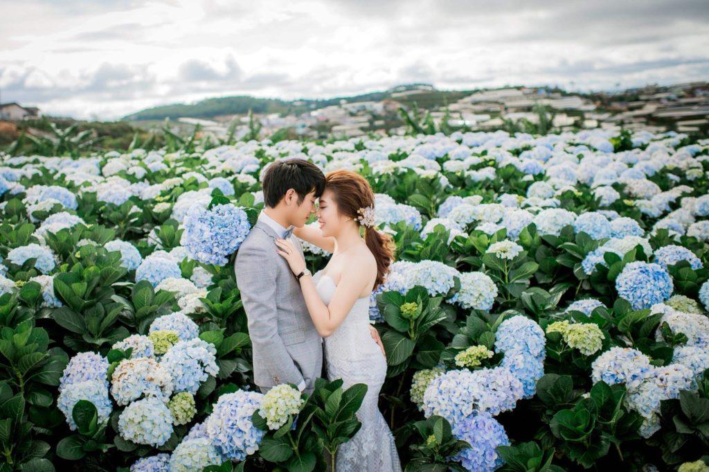 Hoa Cẩm tú cầu nở vào mùa nào ở Đà Lạt
