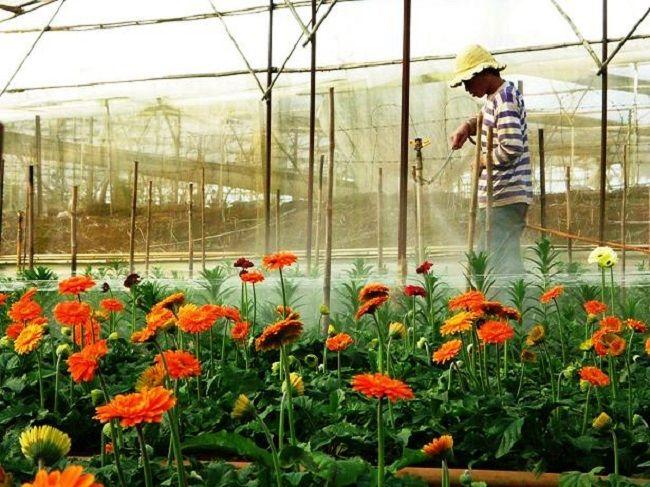 Làng hoa vạn thành Đà Lạt review