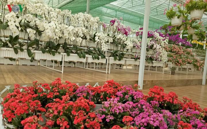 Làng hoa vạn thành thành phố Đà Lạt, Lâm Đồng
