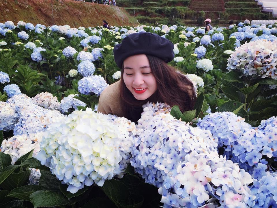 Vườn hoa cẩm tú cầu lạc dương
