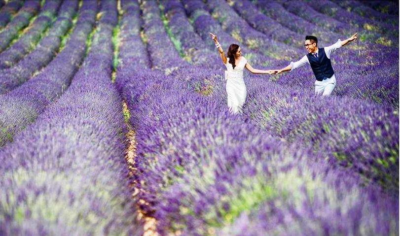 Vườn hoa Lavender Đà Lạt có gì