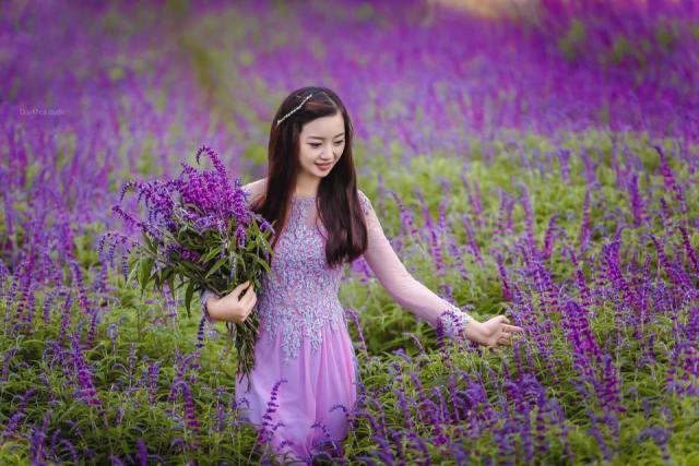 Vườn hoa Lavender Đà Lạt nở vào tháng mấy