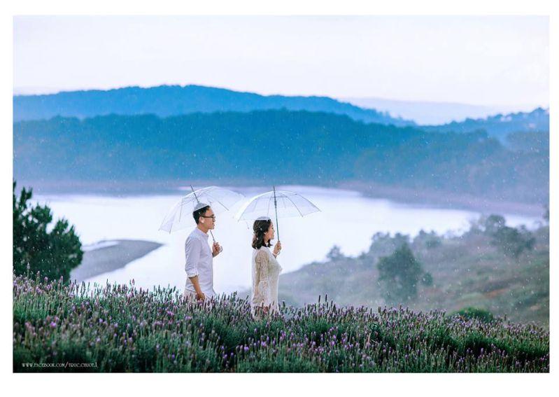 Vườn hoa Lavender hồ Tuyền Lâm Đà Lạt