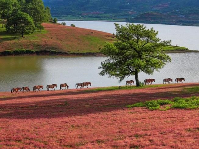 giá tour đồi cỏ hồng Đà Lạt