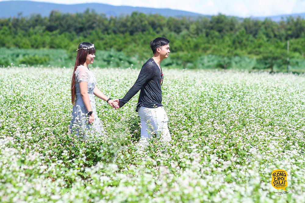 Tour đồi cỏ hồng ở Đà Lạt