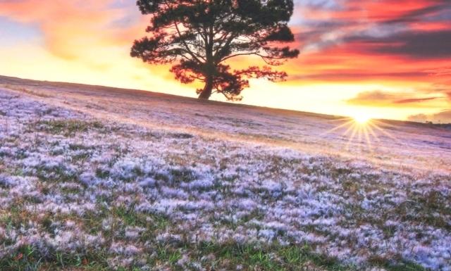 Tour đồi cỏ tuyết Đà Lạt