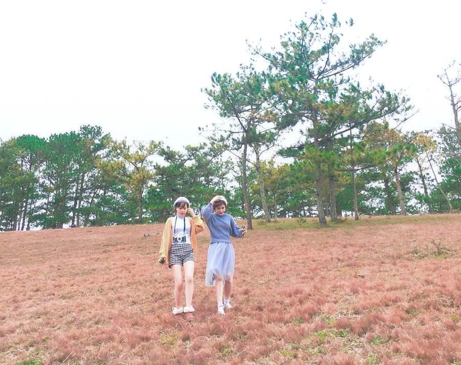 Tour ngắm đồi cỏ hồng Đà Lạt