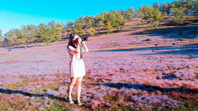 Tour tham quan đồi cỏ hồng Đà Lạt