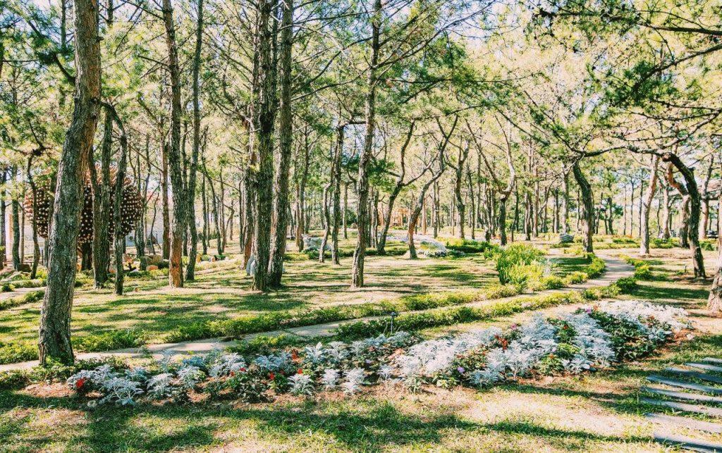 Không gian rừng hoa đà lạt