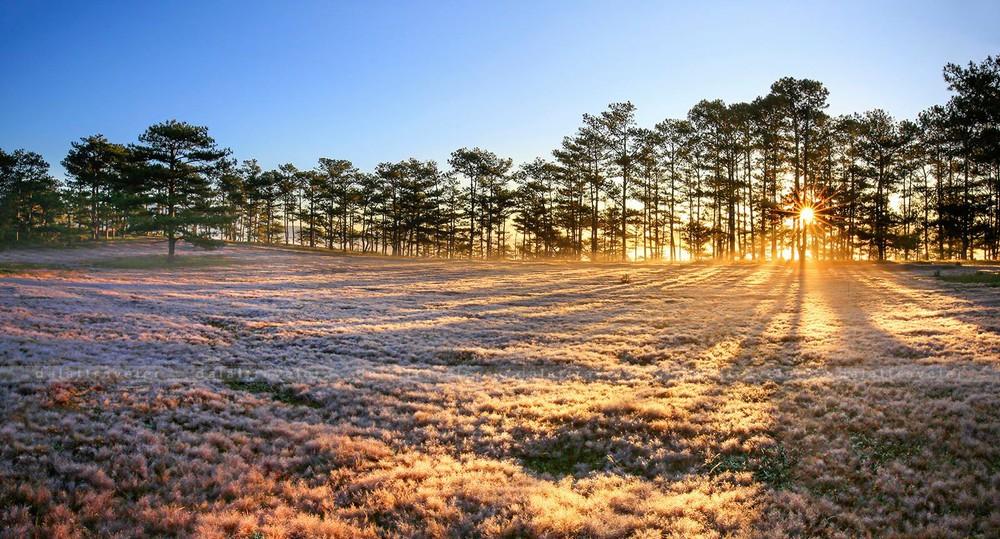 Chụp hình đẹp ở đồi cỏ hồng