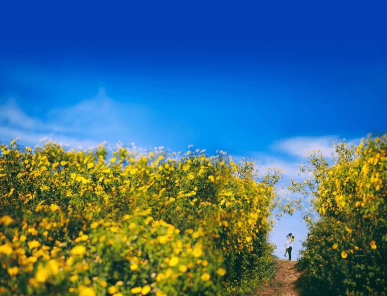 đèo D'ran địa điểm chụp hình đẹp