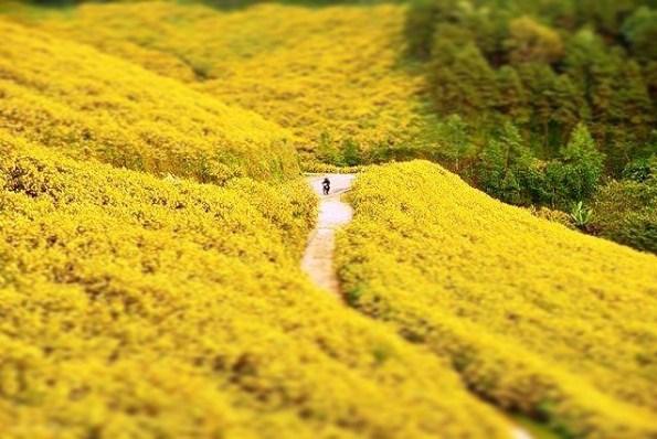 địa điểm chụp hình với hoa dã quỳ