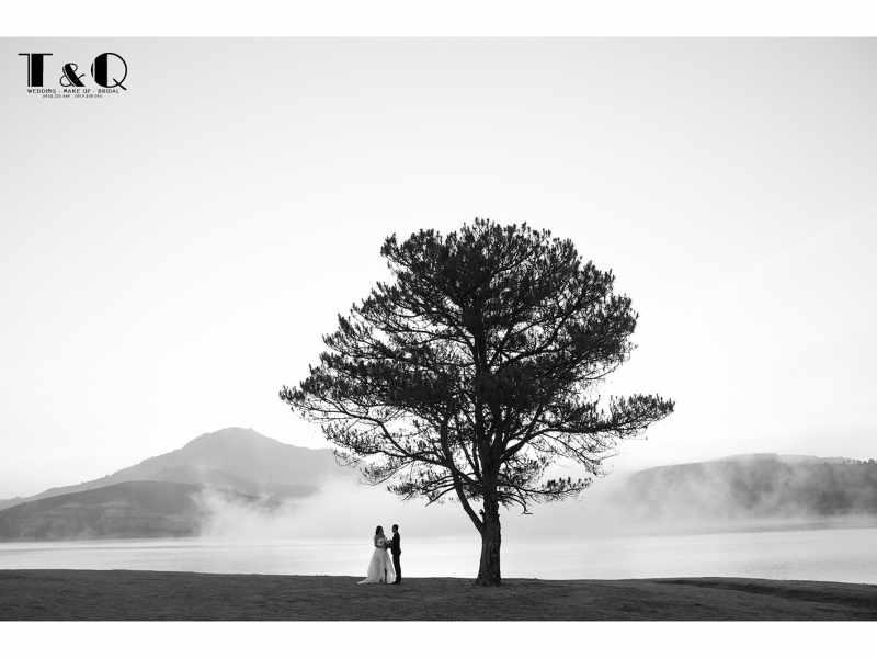 cây thông cô đơn ở Đà Lạt