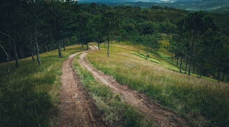 Chì đường đến cây thông cô đơn Đà Lạt
