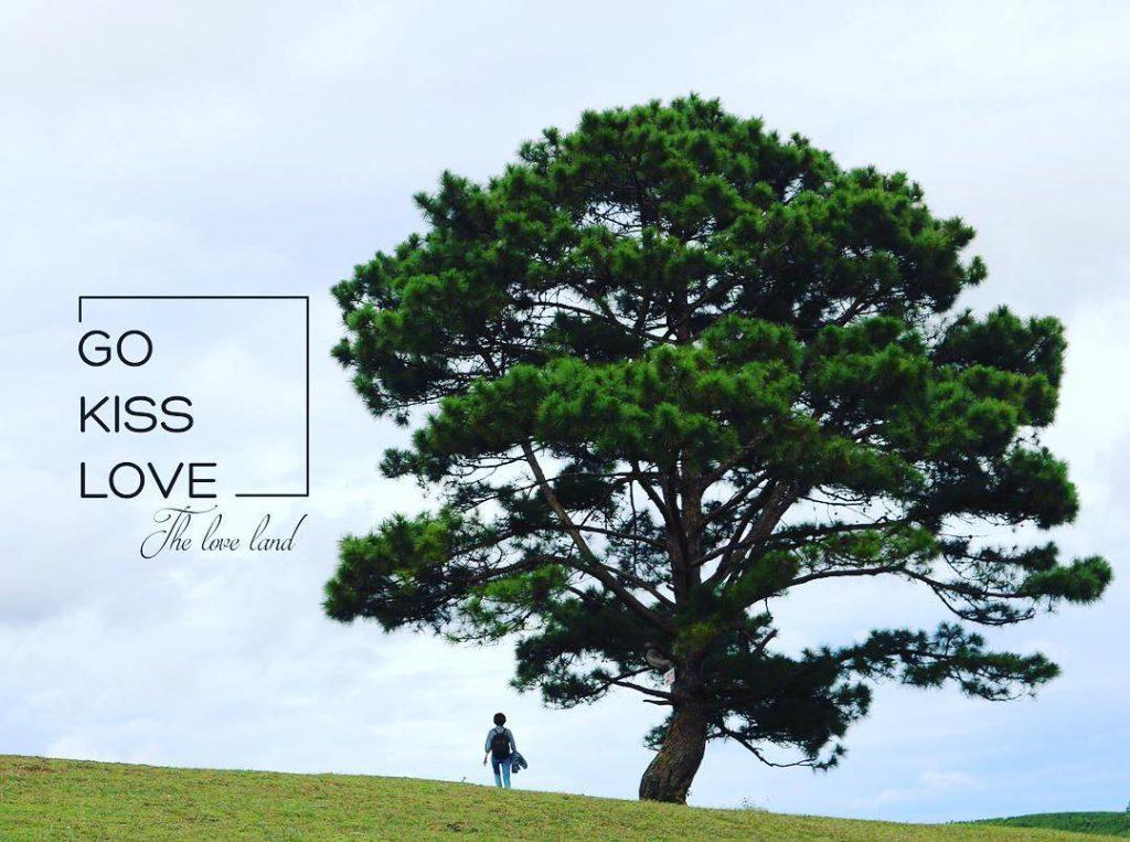hình ảnh cây thông cô đơn Đà Lạt