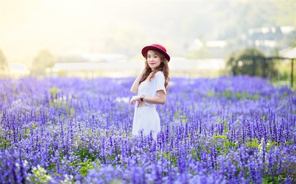 Hình ảnh hoa nữ hoàng xanh đà lạt