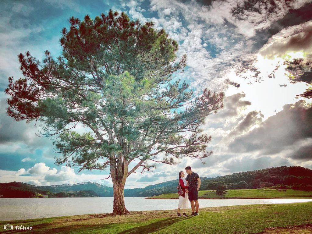 Review cây thông cô đơn Đà Lạt