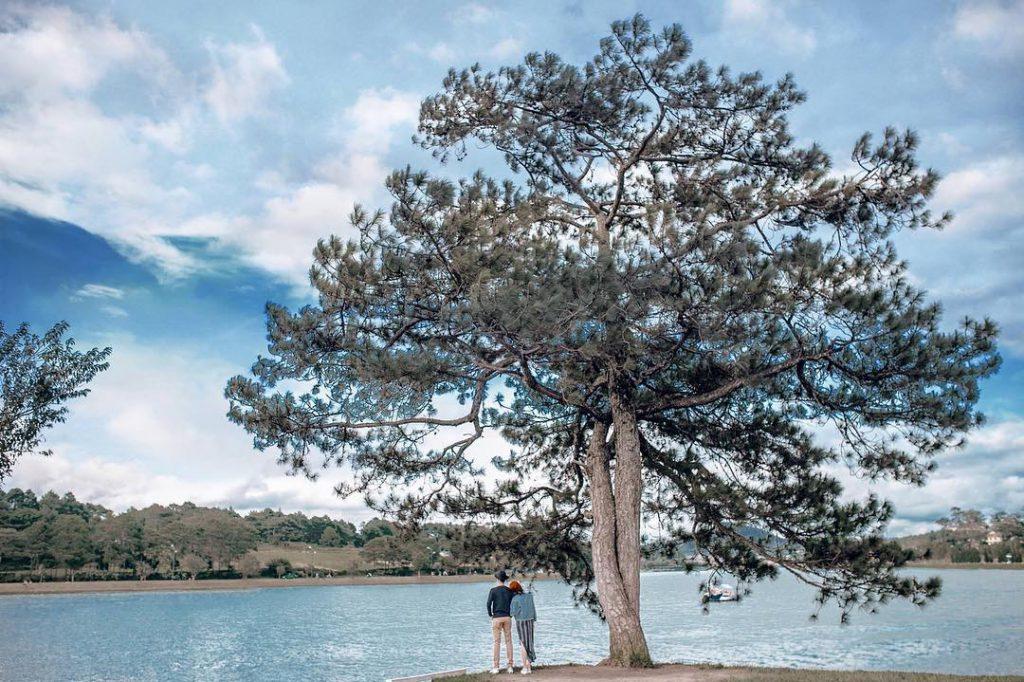 Thời gian đẹp nhất để đi cây thông cô đơn