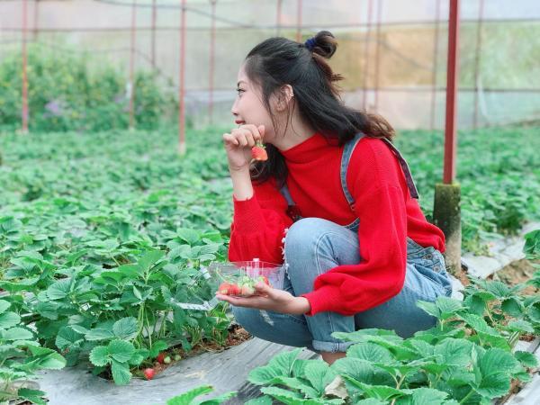 Vườn Dâu Nguyễn Lâm Thanh Đà Lạt