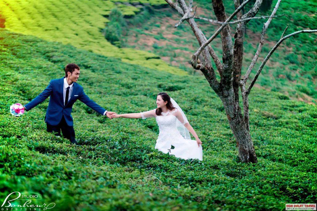 Chụp ảnh cưới ở đồi chè cầu đất