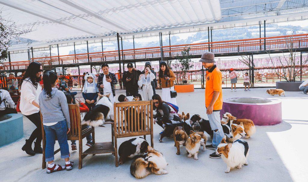 Check in Puppy Farm Đà Lạt
