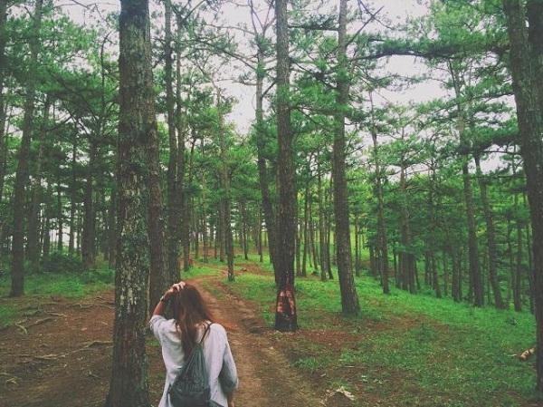 đường đi rừng thông đà lạt