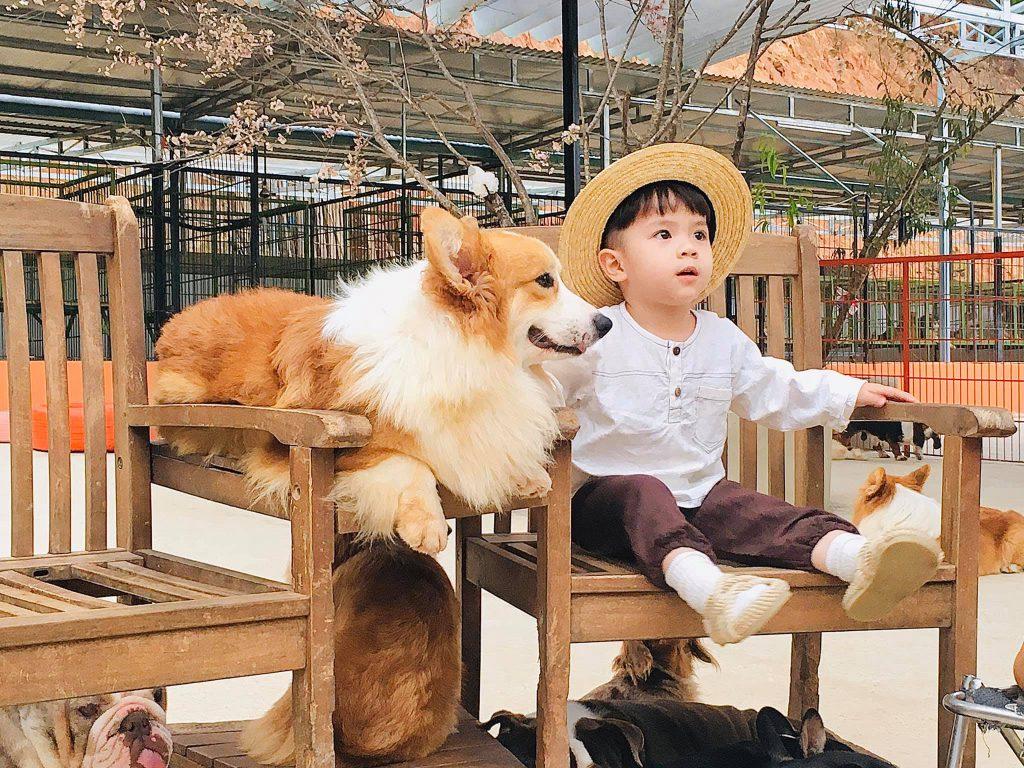 Tất tần tật thông tin về trang trại cún - Puppy Farm Đà Lạt