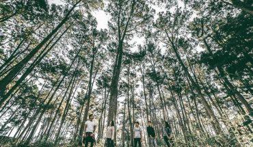 rừng thông đà lạt