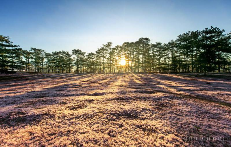 rừng thông đồi cỏ hồng