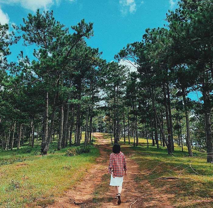 rừng thông ở đà lạt