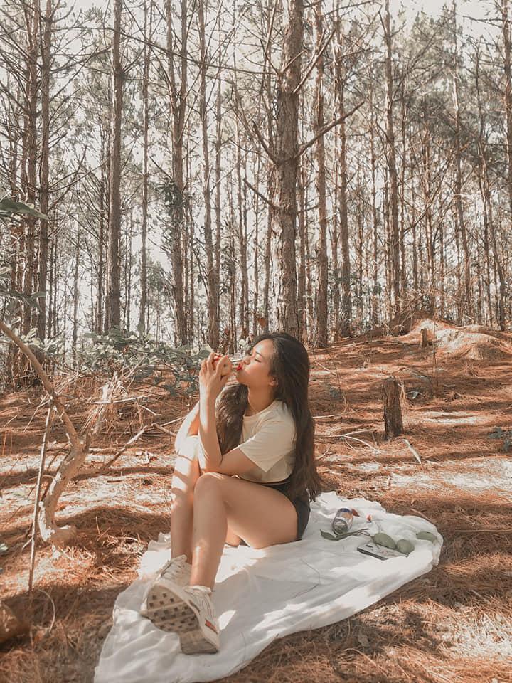 rừng thông tại Đà Lạt