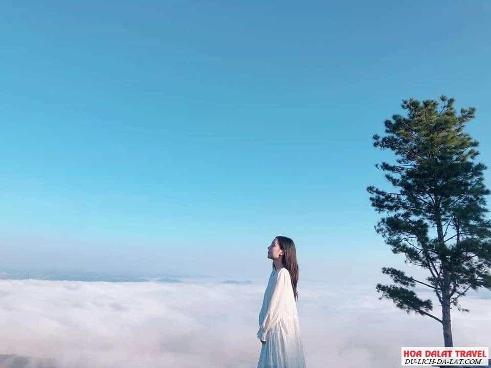 Tour săn mây ngắm bình minh Đà Lạt