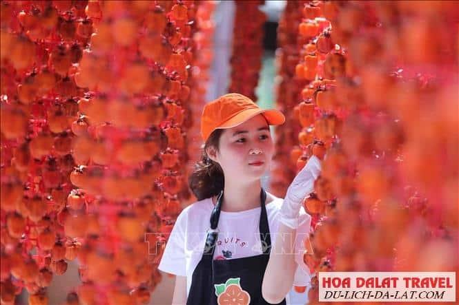 Cơ sở sản xuất hồng treo ở Đà Lạt